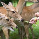 Domaće i divlje životinje